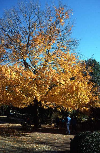 Herbst in Neuengland