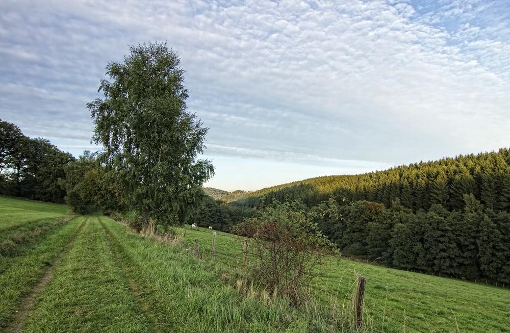 Herbst in Niederholte