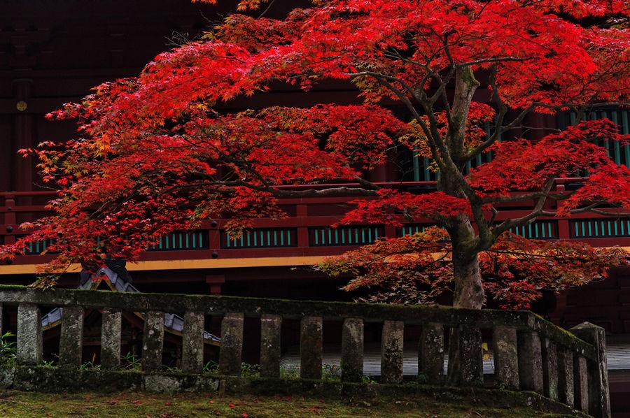 Herbst in Nikko