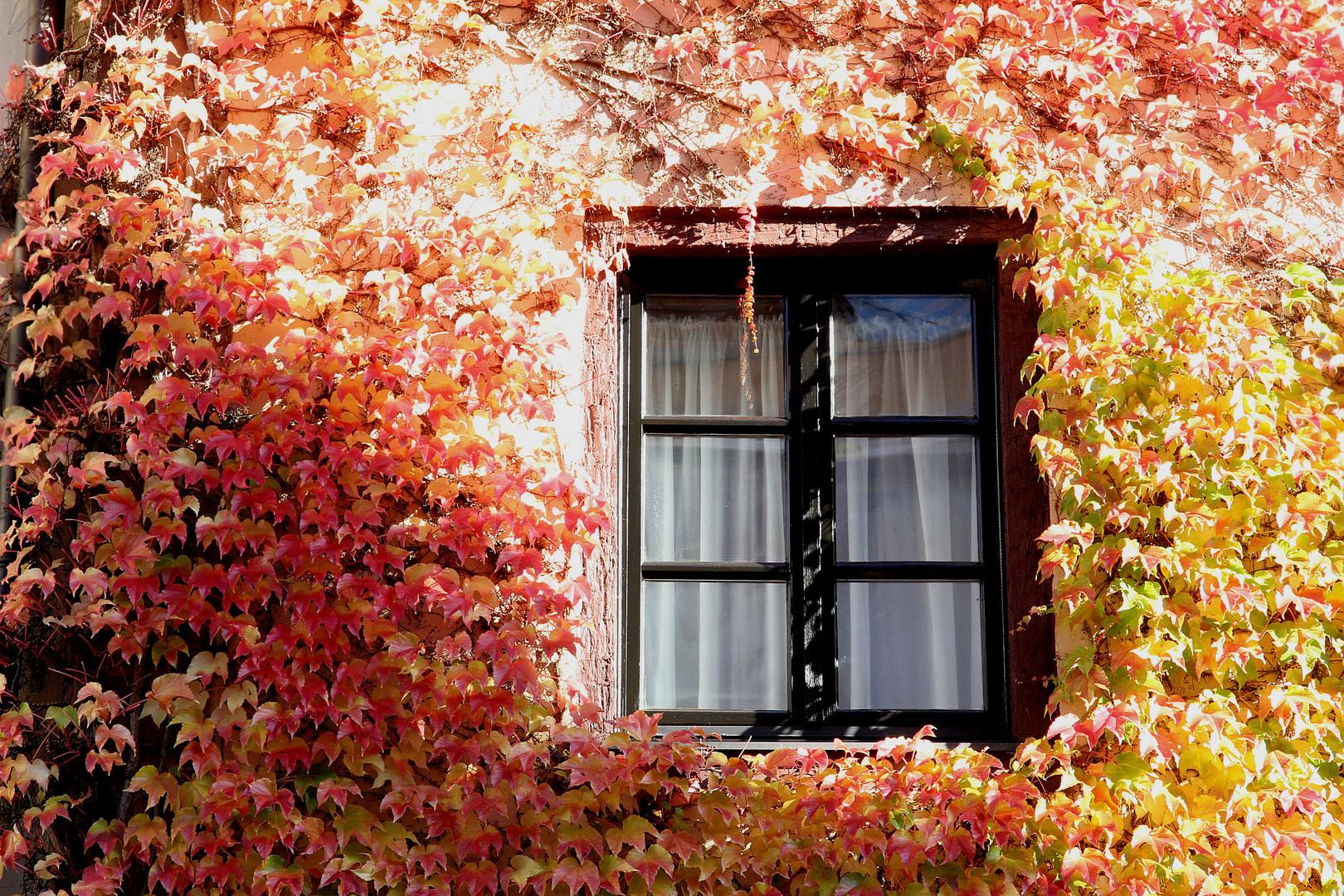 Herbst in Nürnberg 2