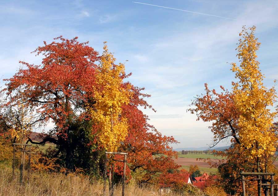 Herbst in Oberalba