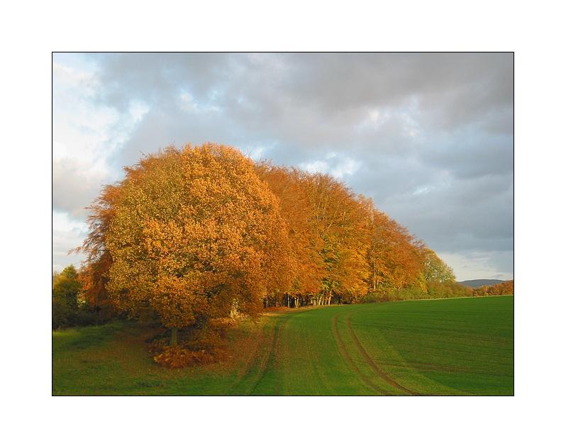 Herbst in Ostwestfalen