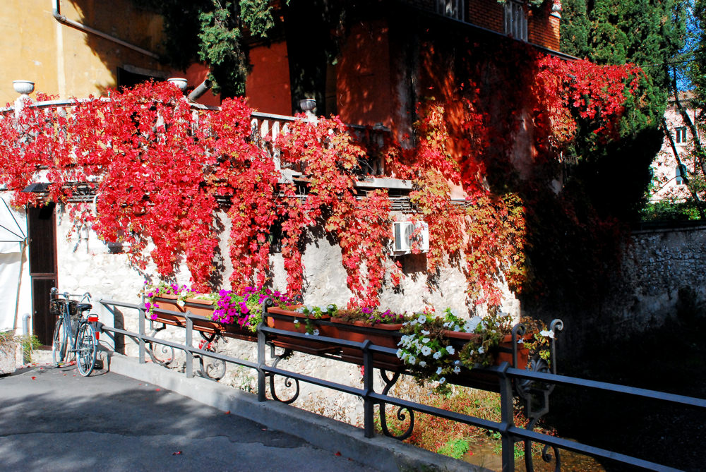 Herbst in Rot
