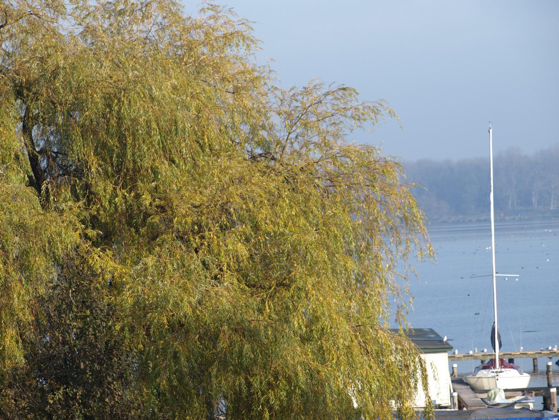 Herbst in Rotterdam - Kralingen -2-
