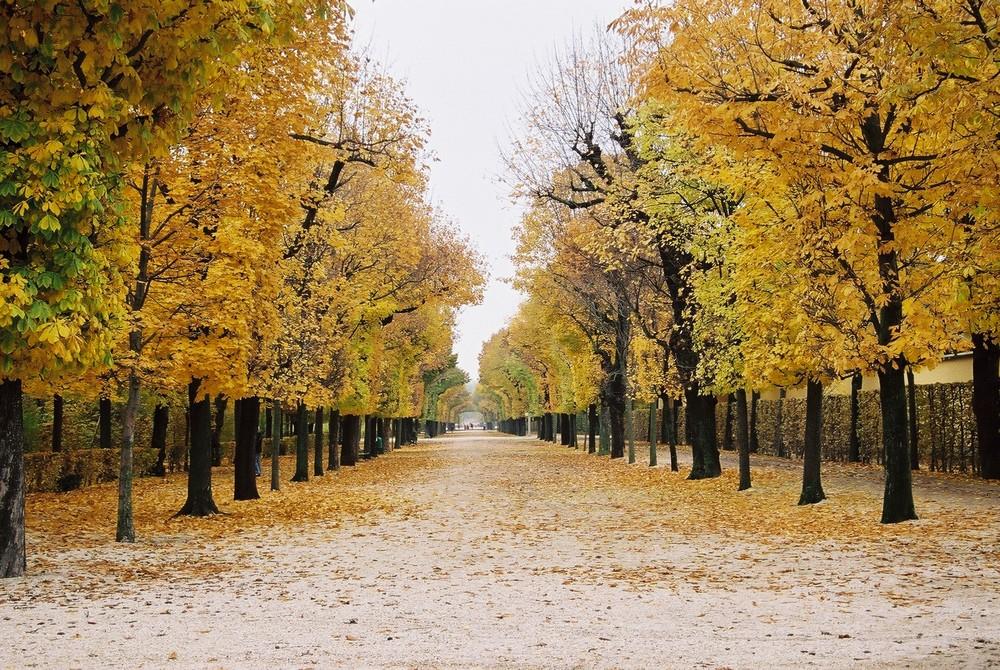 Herbst in Schönbrunn 1