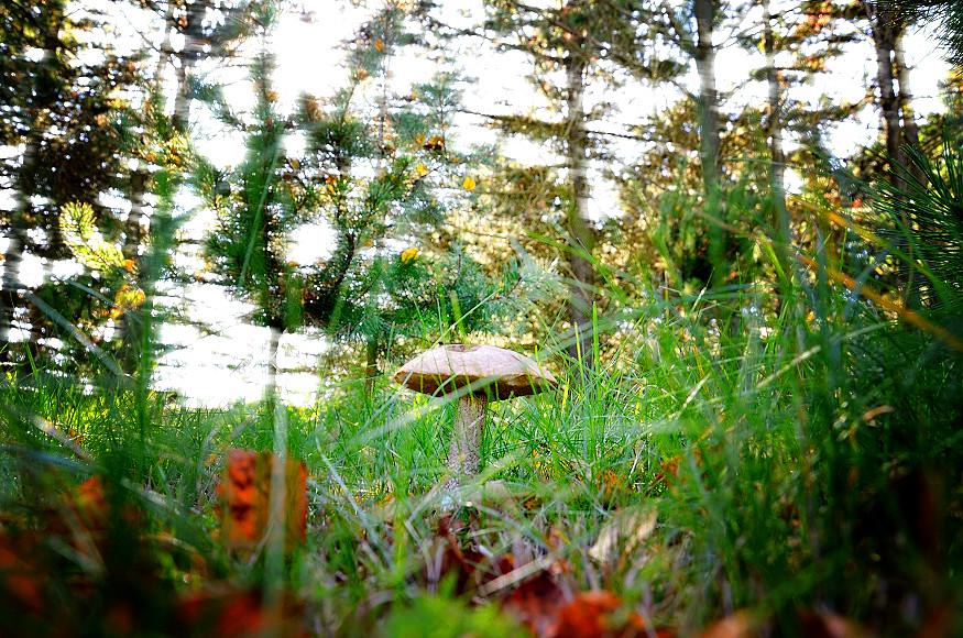 Herbst in Skagen Dänemark