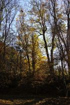 Herbst in Tirol 4