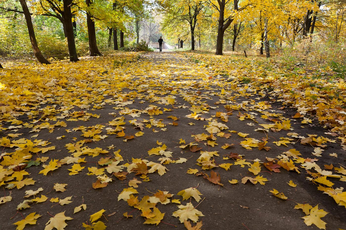 Herbst in Ukraine