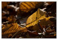 Herbst in unserem Garten