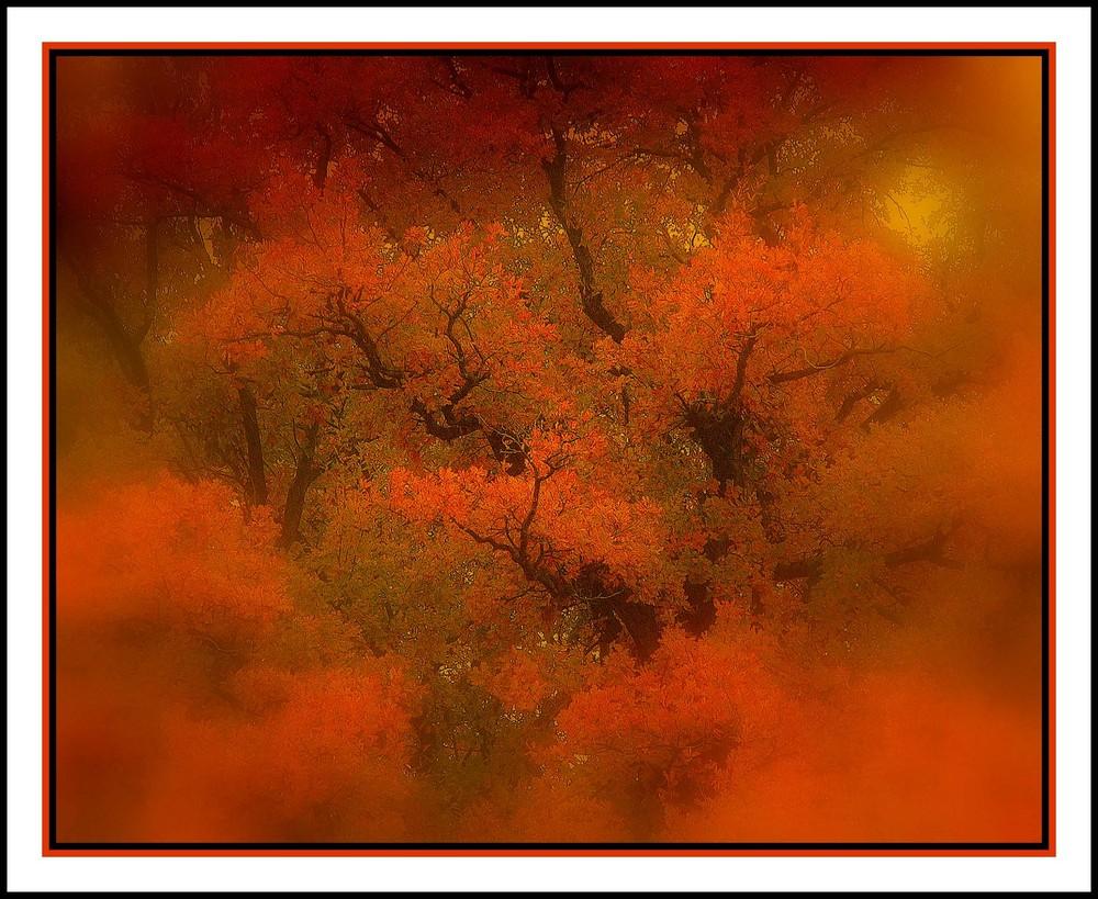 Herbst in Wedde # 2