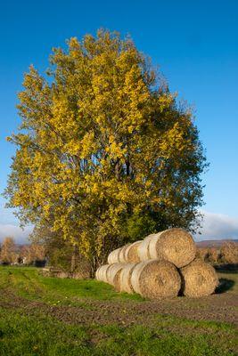 Herbst in Westfahlen