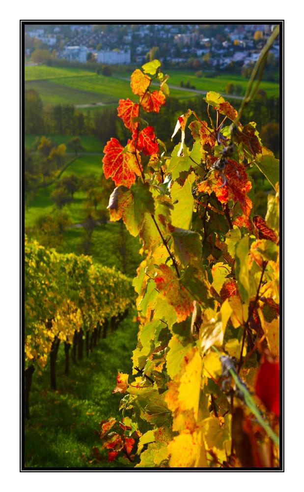 Herbst in Winnenden.....2