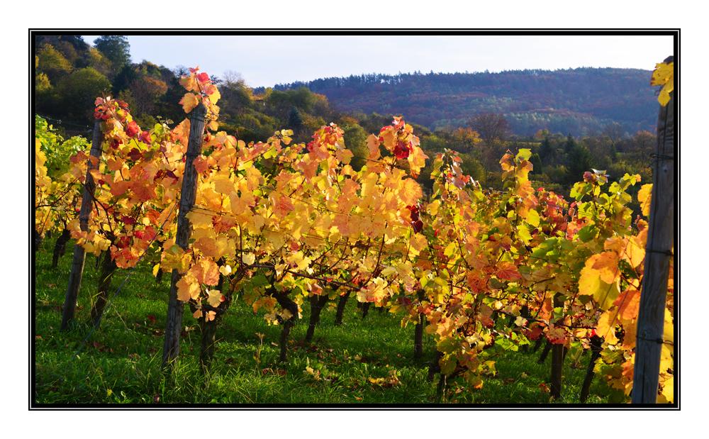 Herbst in Winnenden.....5