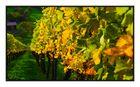 Herbst in Winnenden.....6