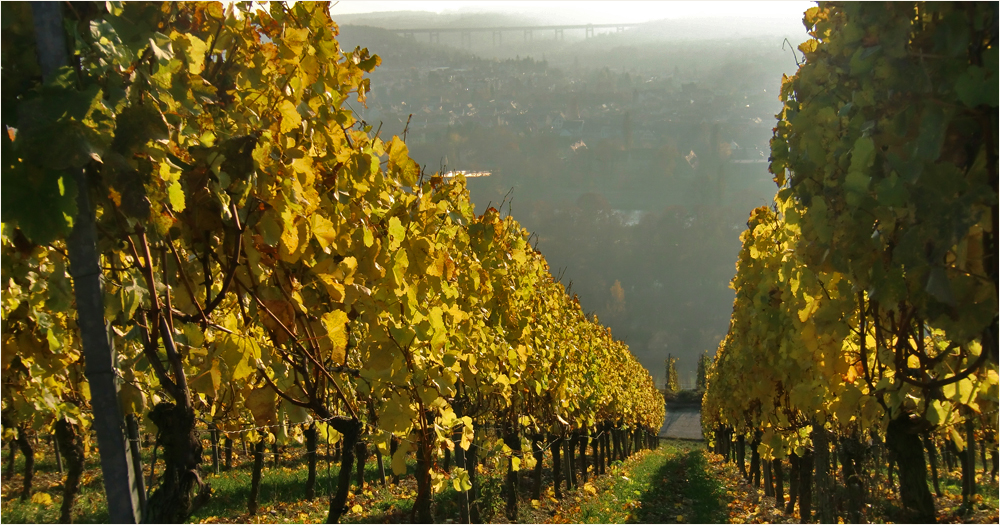 Herbst in Würzburg (11)