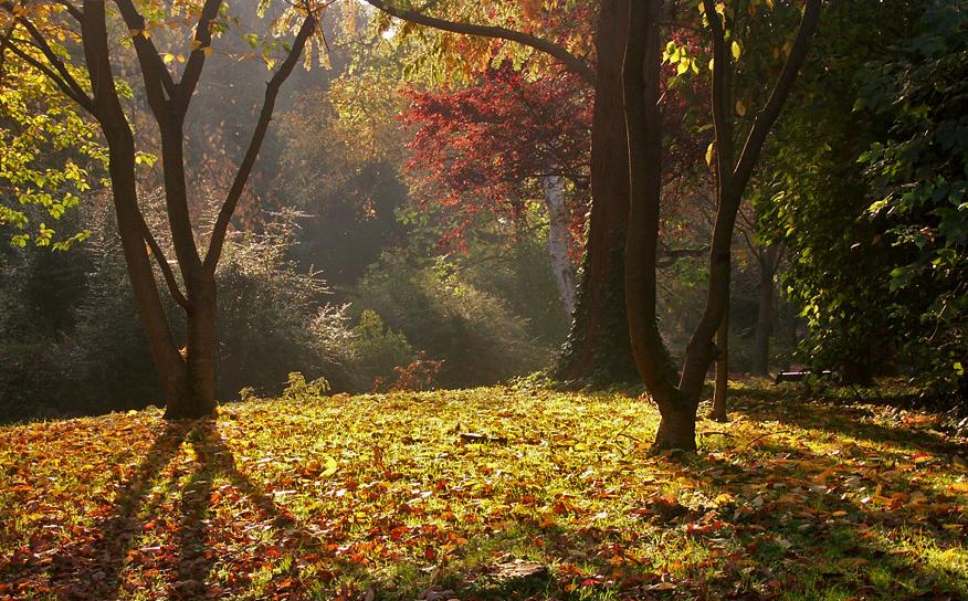 Herbst in Würzburg (7)