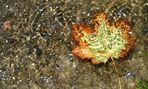 Herbst, ins Wasser gefallen
