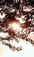 Herbst ist bald da