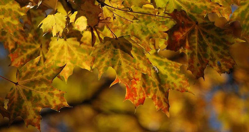 Herbst ist im September