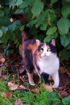 Herbst Katze
