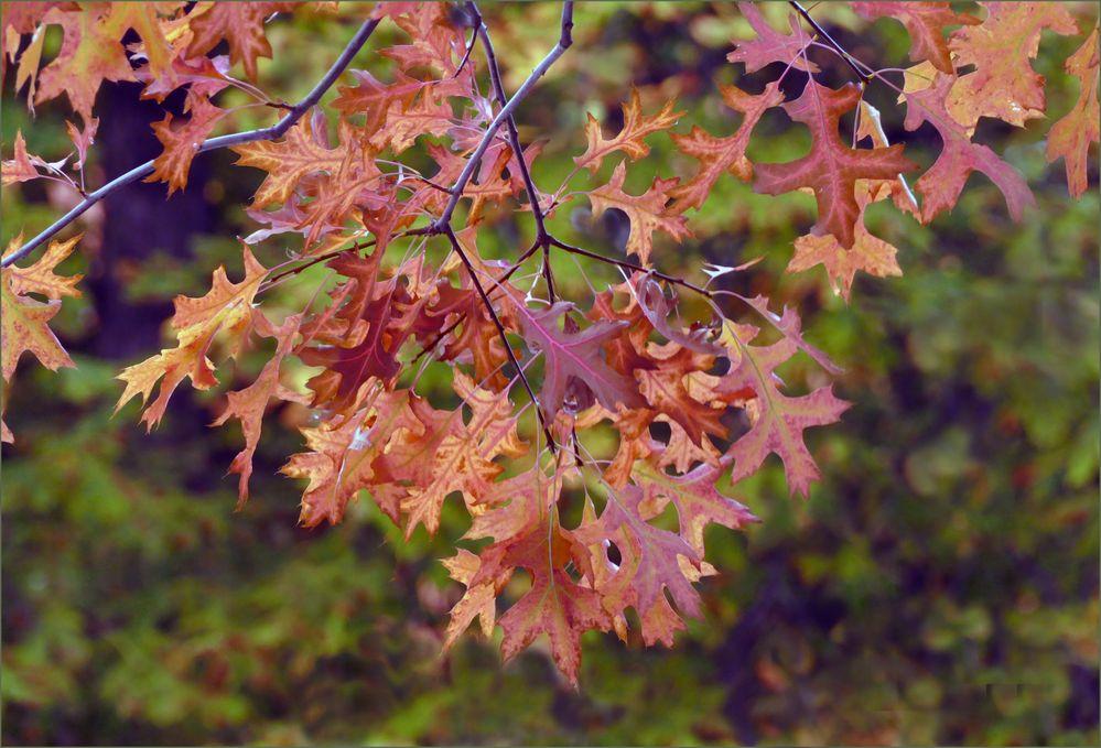 Herbst lässt dich grüßen!