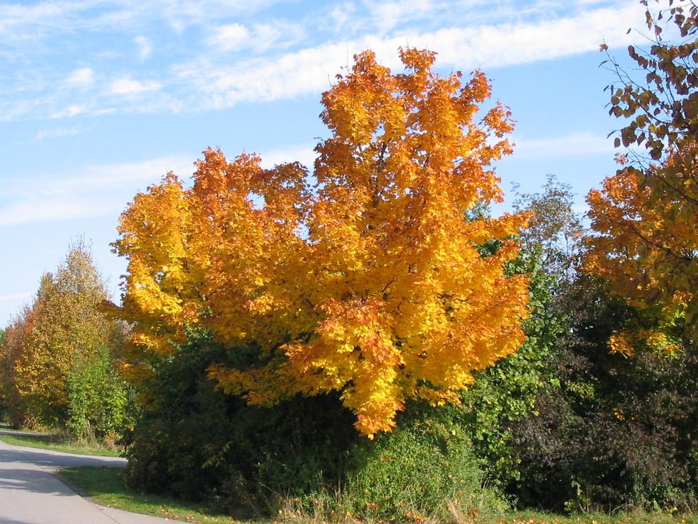 Herbst-Leuchten