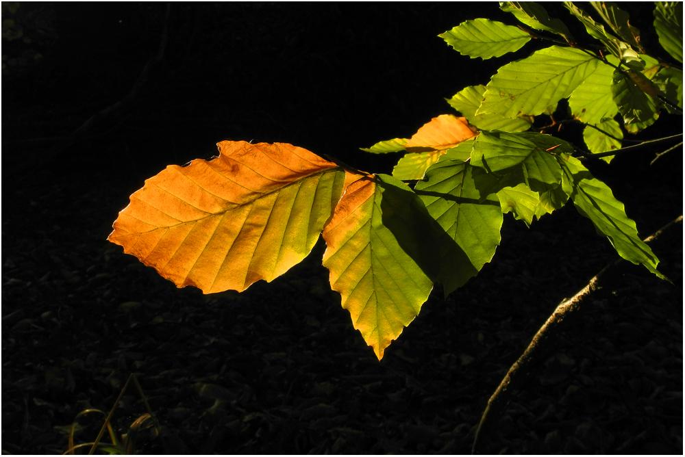 Herbst . . .lich . . .ter