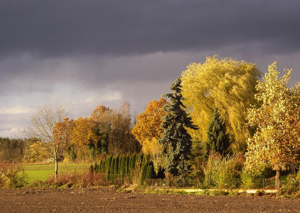 Herbst-Licht