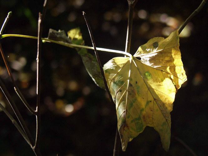 Herbst Lichtspiele