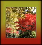 Herbst Missglückt