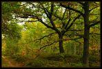 Herbst mitten im Wald