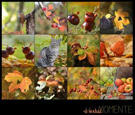 Herbst Momente