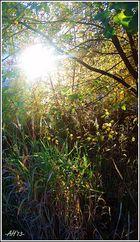 Herbst-Morgen-Sonne