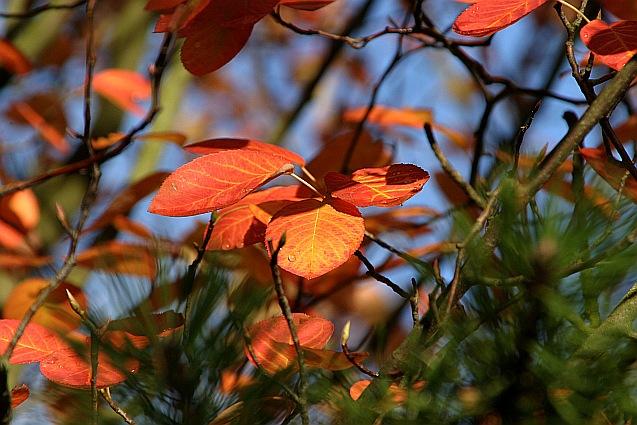 Herbst Motiv