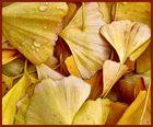Herbst în Ginko