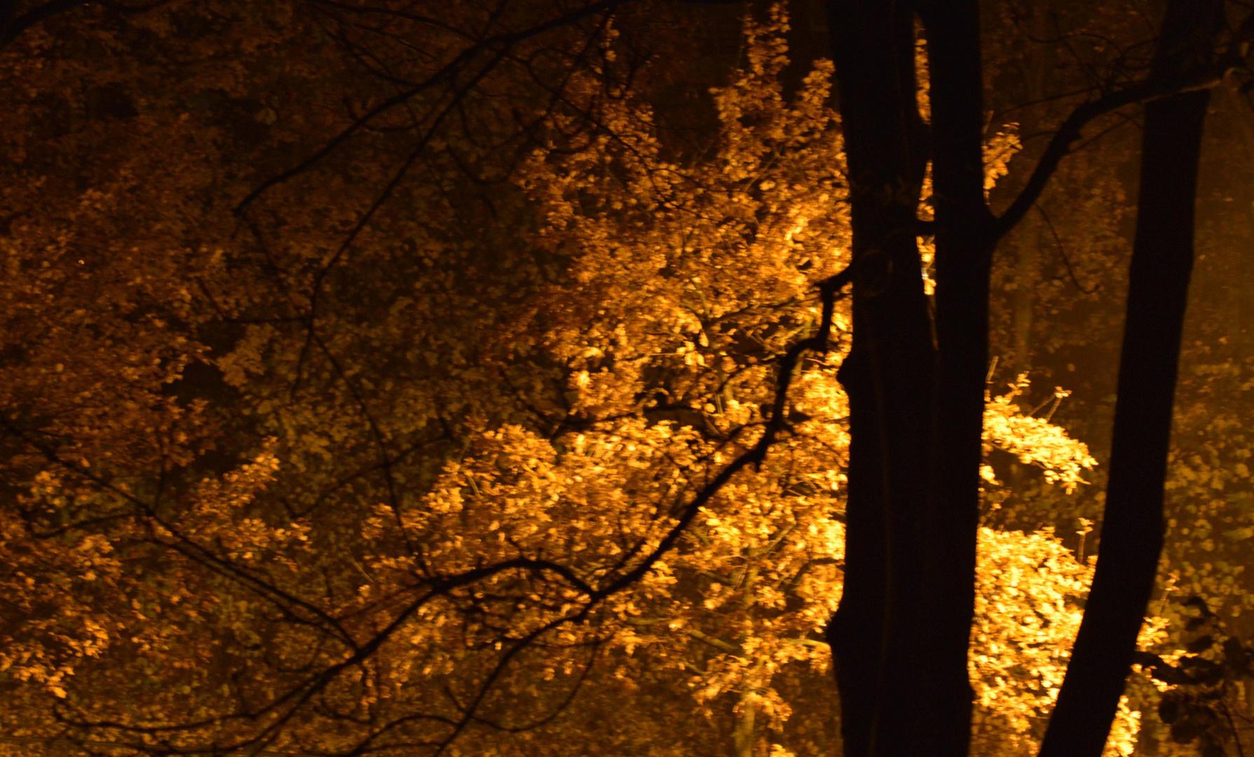 Herbst Nacht