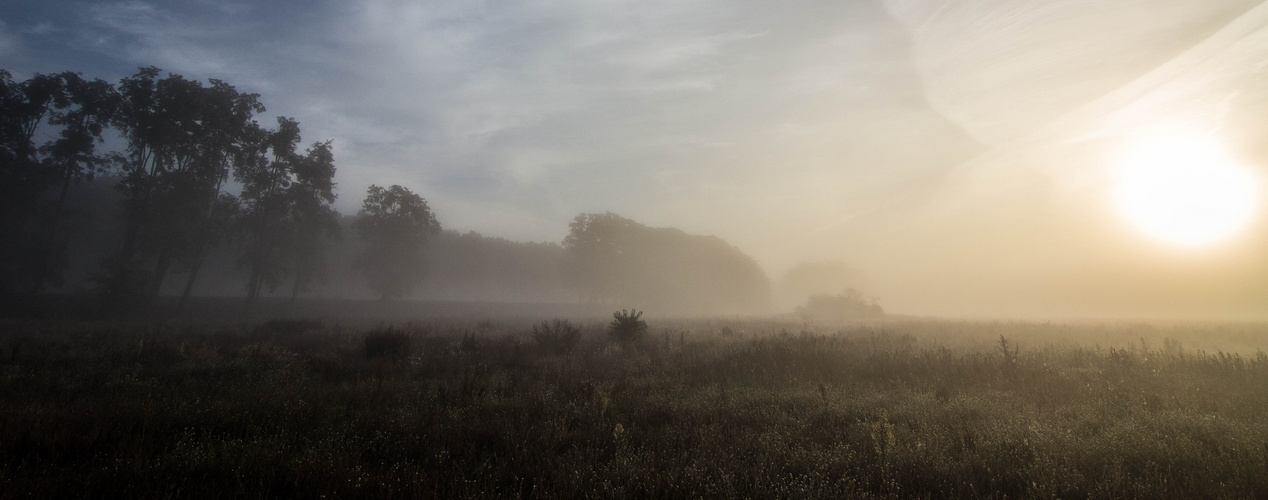 Herbst-Nebel-Stimmung