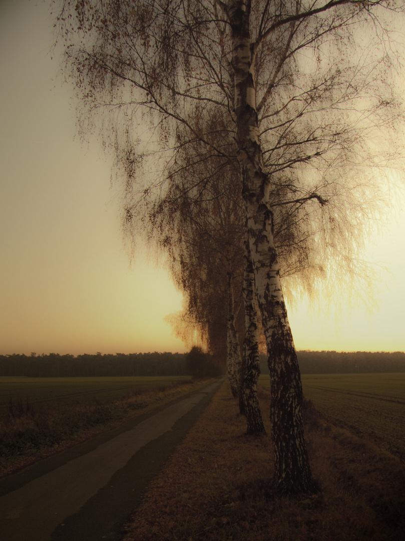 Herbst (November 2011)