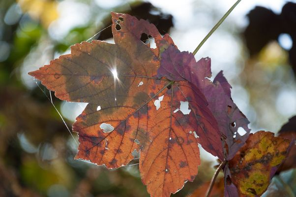 Herbst NRW 2012...