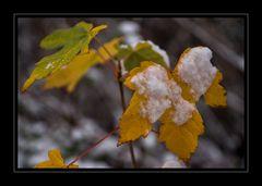 Herbst oder Winter?