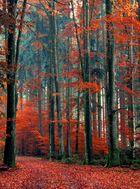 Herbst Orange