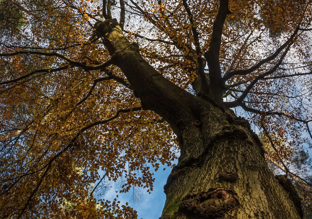 Herbst-Perspektive