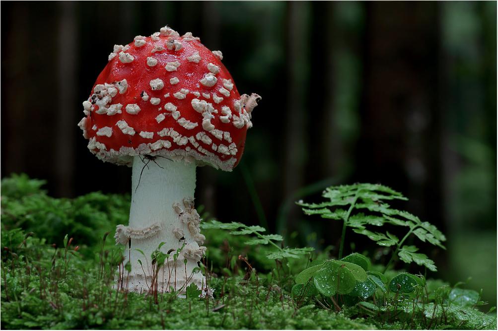 Herbst Pilz