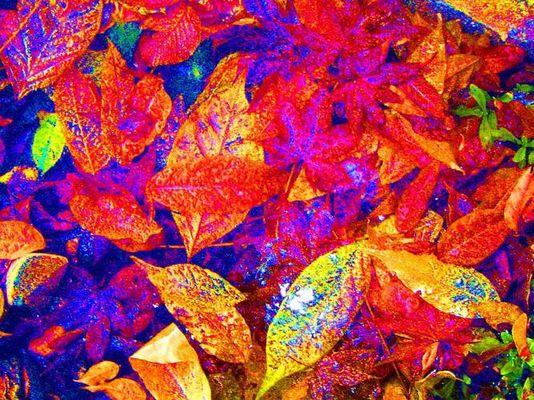 Herbst Pop Art