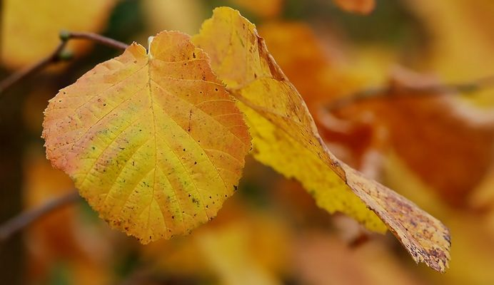 Herbst pur