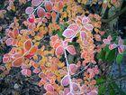 Herbst-Raureif