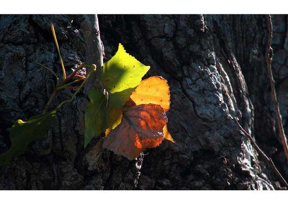Herbst - Reduktion