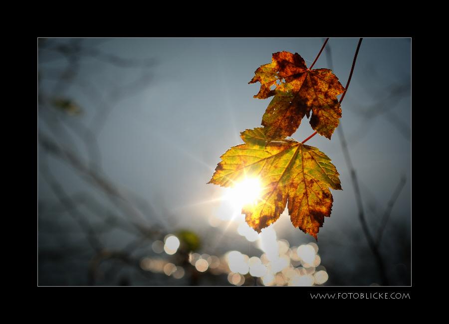 Herbst Reflex