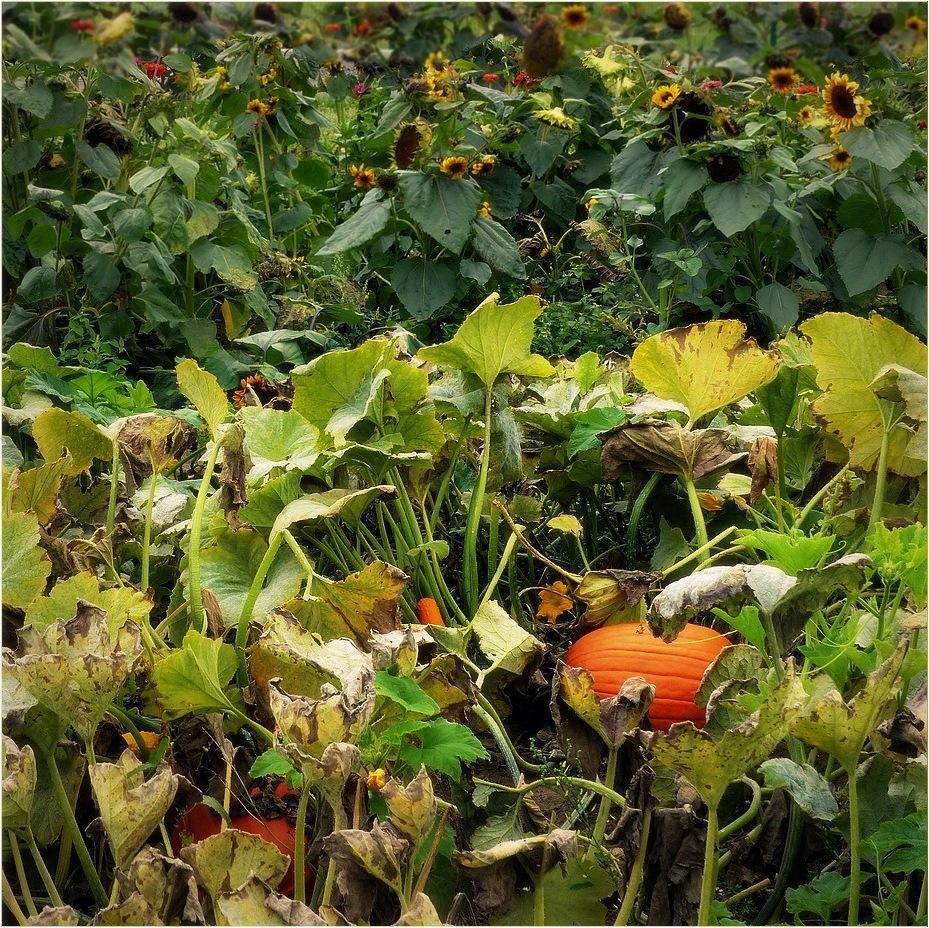 Herbst ~ Relikte