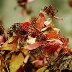Herbst Reste....